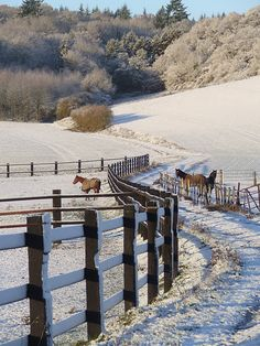 winter horses. Love the fencing!