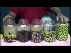 From Olives to Oil, The Italian Way - YouTube