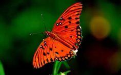 фото бабочки: 14 тыс изображений найдено в Яндекс.Картинках