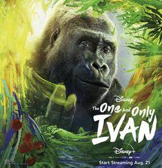 Bryan Cranston, Danny Devito, One And Only Ivan, Sleepless In Seattle, Disney World Restaurants, Disney Plus, Disney Live, Disney Disney, Disney Dining
