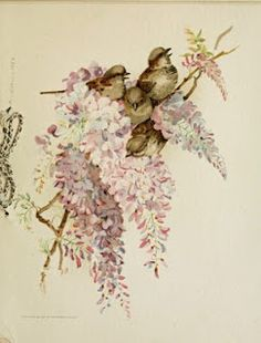 Birds and wisteria, 1887