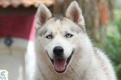 Todas as pessoas que convivem com cães asseguram que eles são capazes de perceber seus...