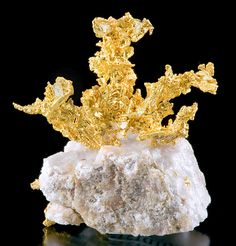 """Incredibly brilliant, crystalline specimen of Native Gold rising atop Quartz matrix! "" From the Eagle's Nest Mine, Placer County, California. from Exceptionalminerals.com"