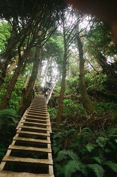Hike he pacific rim trail