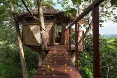 Sacred Geome-Tree House - Treehouses for Rent in Montezuma