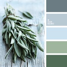 Very light and cold composition turned out in this palette through a combination of cool shades of blue color and spring grass. All shades in this palette belong to one color and its variations are different, so very harmonious palette. It is perfect for the creation of images of women with spring tsvetotip.