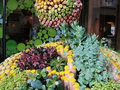 I love this!  Succulent planters with painted corks as plant dividers!  I love succulents!