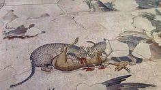 Una coppia di pantere divora una gazzella - Museo dei Mosaici del Gran Palazzo, Istanbul