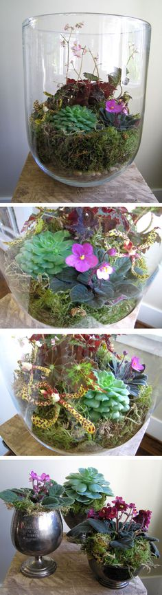 I have had a large glass bowl like the second for many years and have used it for flower bouquets in the past but was thinking a terrarium would be fun. I like this idea a lot. Also the bottom one for using several small pots creatively Succulent Terrarium, Succulents Garden, Garden Plants, Planting Flowers, Succulent Arrangements, Little Gardens, Small Gardens, Indoor Garden, Indoor Plants