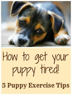 Some great ideas for keeping that busy puppy, well, busy! Repin for future use when you need to tire your puppy out. #blog #puppytips