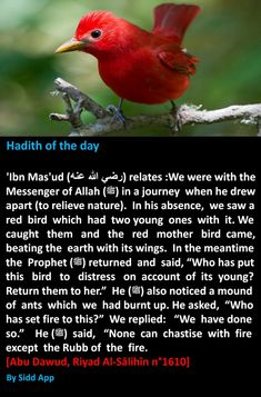 Islam Hadith, Islam Quran, Hadith Quotes, Quran Quotes, Hadith Of The Day, Kdrama Memes, Beautiful Islamic Quotes, Peace Be Upon Him, Islamic Dua