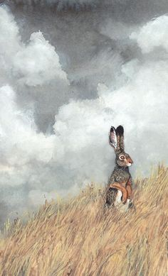 Jackrabbit on the high plains with a bckdrop of stormy skies Maggie Vandewalle -http://www.maggievandewalle.com/