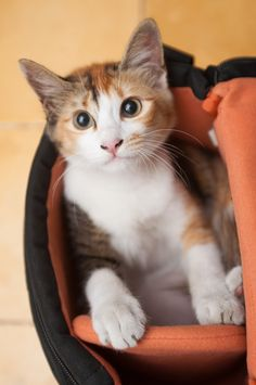 Kitty in a Camera Bag...there will be fur on the sensor!