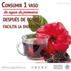 Consumir 1 vaso de agua de Jamaica después de comer, facilita la digestión.SAGARPA SAGARPAMX #MéxicoAgroPotencia