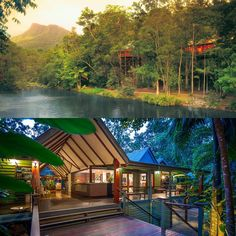 You'll love this one! Private tree house in the canopy of the lush Daintree National Park in #Australia?  Enjoy tropical North Queensland at the Silky Oaks #Hotel.