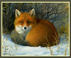 """""""Snug"""" - fox painting by Shawn Faust"""