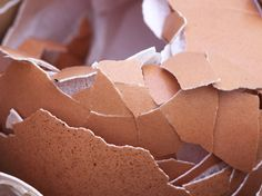 Eggshells are a great natural organic fertilizer and pest control for anyone's garden. Learn how to use them properly for best results in this article! Organic Fertilizer, Organic Gardening, Gardening Tips, Organic Pesticides, Gardening Services, Gardening Gloves, Container Gardening, Get Rid Of Lizards, How To Make Omelette