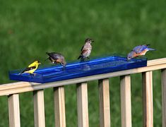 This Bird Bath Tray at Duncraft is an easy way to offer water to birds without a big investment.