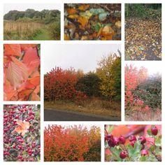 Autumn at Herrington park