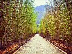 Kyoto? Nope this Bamboo Forest is actually in Dali China at the Butterfly Spring Park.  Lesser known to many Dali is one of the most fascinating cities in China and about 5 hours out of Yunnan. It is rich with culture ecotourism and heritage and one of the highlights here is the famous 3 Pagoda's of Changshan. Apart from that there is also the amazing Changshan mountain range and the Bai people of Dali.  I had the pleasure of visiting this amazing destination a couple of years ago with…