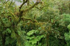 pluvial floresta - Pesquisa Google