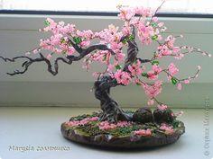 Бонсай Сакура. фото 10