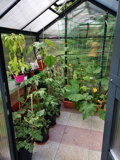 Gardenplaza: Selbstversorger werden dank Gewächshaus, Hochbeet & Co. (Foto: epr/WAMA) Plants, Wood Stone, Harvest, Fruit And Veg, Plant, Planets