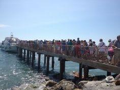 Whale watching Laigueglia