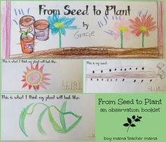 Boy Mama Teacher Mama   From Seed to Plant Booklet