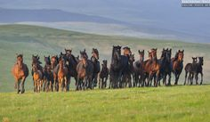 Photographs of horses from Caucasus, Russia by Ekaterina Druz Equine Photography