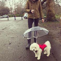 Dog Umbrella, Under My Umbrella, Forest And Wildlife, Under The Rain, Walking In The Rain, Getting Wet, Dog Leash, Go Outside, Dog Love