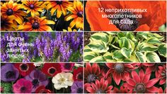Красивоцветущие неприхотливые цветы для начинающих дачников долгоцветущие садовые многолетники требующие минимального ухода подборка фото видео описание уход