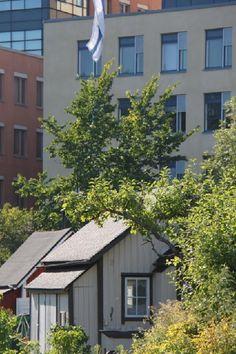 Ruskeasuon siirtolapuutarha, Helsinki