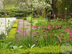 Huomioi nämä 3 asiaa valitessasi tulppaaneja kevääksi! | Puutarhasuunnittelu Puksipuu