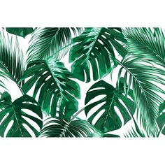 Bay Isle Home Bannock Removable Tropical Palm Leaves L x W Peel and Stick Wallpaper Roll