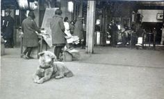 Rare photos have emerged of Hachiko, the loyal dog. Hachiko would greet his human companion Ueno every day at the train station after work; Ueno died suddenly on the job, but Hachicko still waited for 10 long years for his return.
