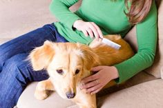 Aprende consejos simples para controlar las pulgas y garrapatas en la piel de tus mascotas y en todo tu hogar.