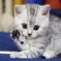 HELLO little cutie. pic.twitter.com/Wtyf91IM73