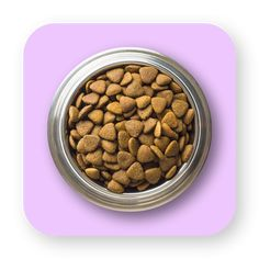 Wuauh | Pide lo que quieras para tus mascotas Dog Food Recipes, Pets, Dog Recipes