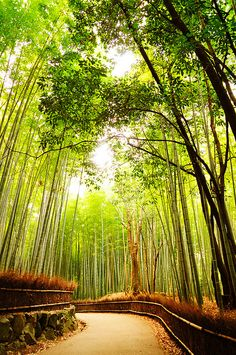 Bamboo Forest - Japan >>> I would love to take a stroll through here...