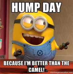 hump day because i'm better than the camel! - dave le minion ...