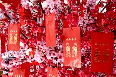 plum blossoms for chinese new year