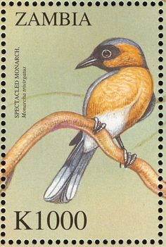 Spectacled Monarch stamps - mainly images - gallery format