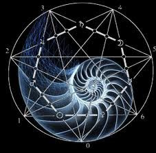 Sacred Geometry of the Nautilus Shell. The Chambered Nautilus is a living fossil that has survived in Earth's oceans for the last 500 million years. Existing before there were fish, dinosaurs, or mammals, the Nautilus could grow up to six meters long. Fibonacci Number, Art Du Monde, Sacred Geometry Art, Nature Geometry, Nautilus Shell, Golden Ratio, Flower Of Life, Patterns In Nature, Fractals