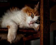 Cat by Guto_Vilaça on Flickr