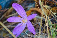 Beautiful Purple wilde Flower