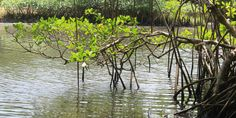 Fideicomiso de Conservación crea nueva unidad Para la naturaleza