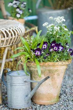 Pretty garden pot - looking forward to spring