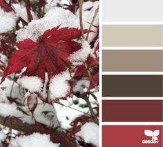 First Snow Hues - http://design-seeds.com/index.php/home/entry/first-snow-hues