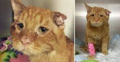 Tierheim beschließt eine Katze einzuschläfern, die 'nicht vermittelbar' war. Eine Stunde später…